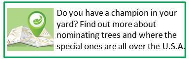Find Champion Trees