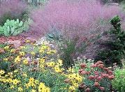FFL Purple Plant