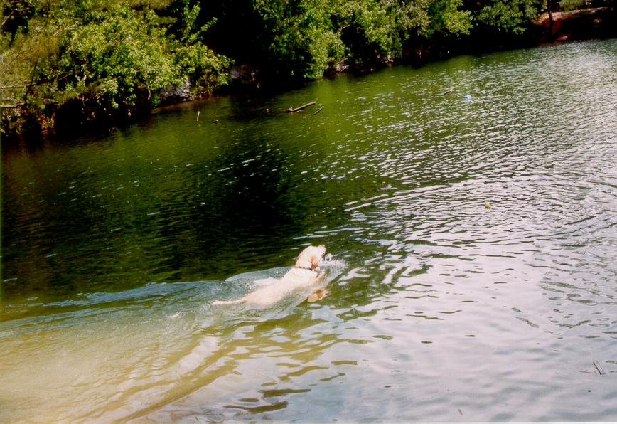 Florida Dog Parks With Swimming