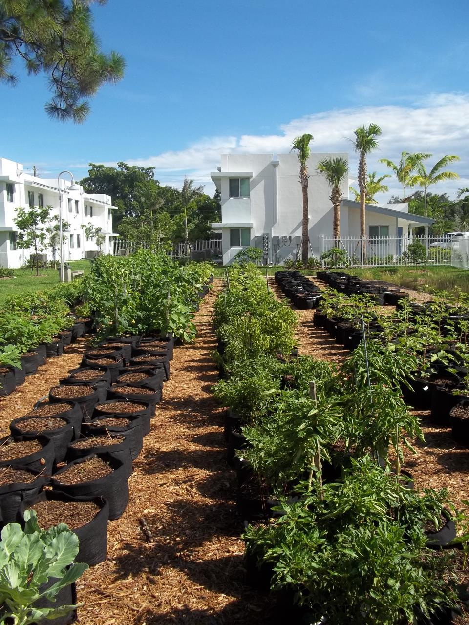 NW Gardens community garden