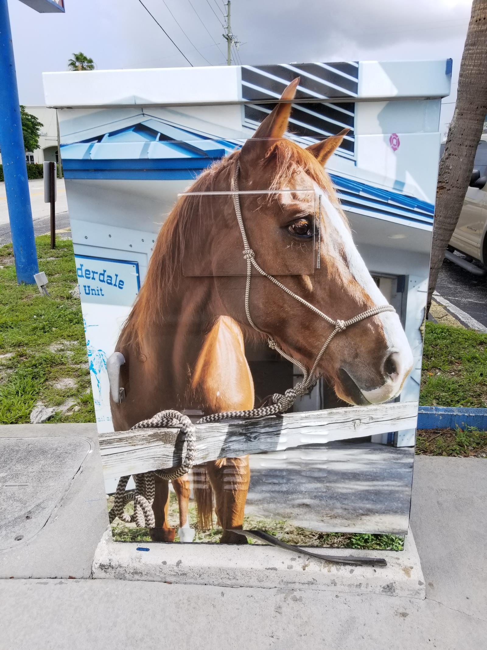Officer Danny - A retired horse from Fort Lauderdale's Mounted Unit