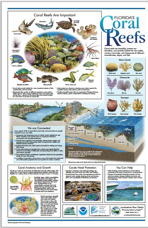 City Of Fort Lauderdale Fl Offshore Reef Projects