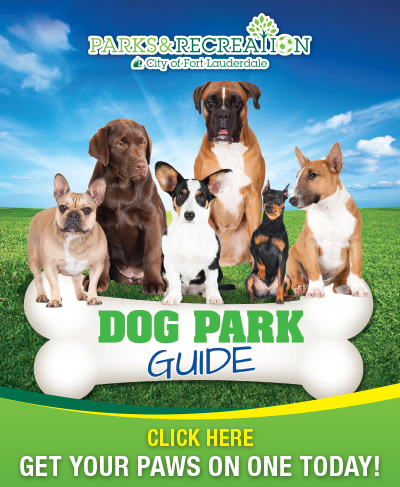 Dog Guide Brochure