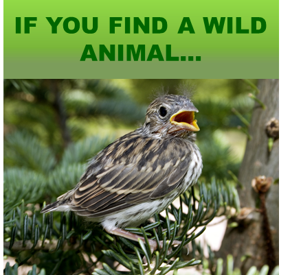 If You Find An Animal..