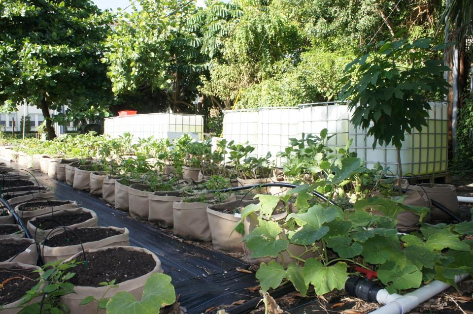 Flagler Community Garden